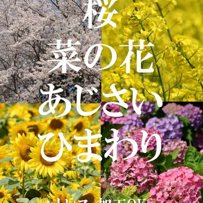 背景資料集「桜・菜の花・あじさい・ひまわり」